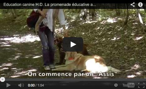 Les bénéfices des promenades éducatives collectives au bois pour les chiens