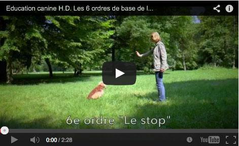 Les six ordres de base de l'éducation canine selon la méthode naturelle