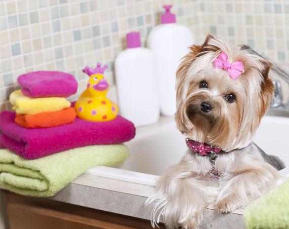 Dog courtoise cours de toilettage canin pour apprendre for Salon toilettage chien